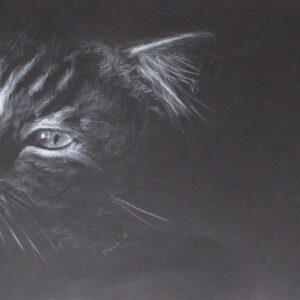 Bild Cat Weisser Bleistift auf Karton