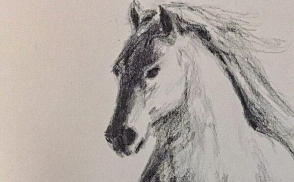 Bild Sad horse Bleistift auf Papier